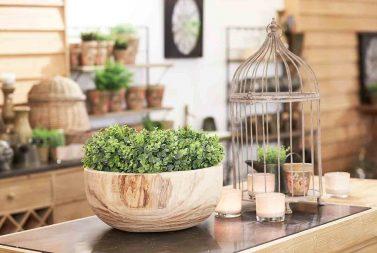 Decoratie plantje