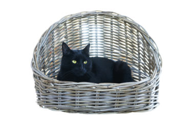 Kattenmand open